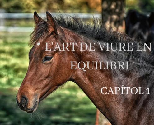 Cavall efecte terapèutic hípica